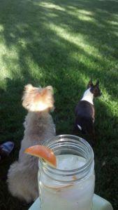 ollie & Lita summer